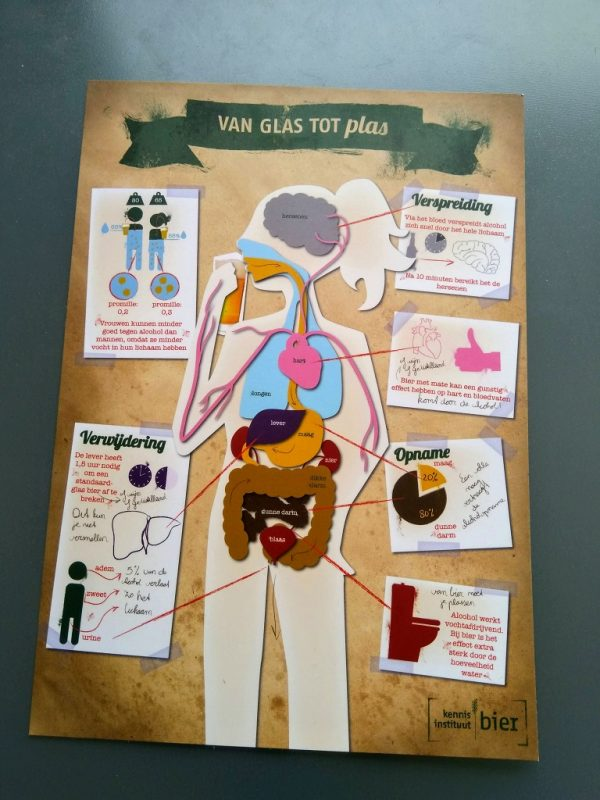 Infographic die laat zien hoe je lichaam omgaat met alcohol.